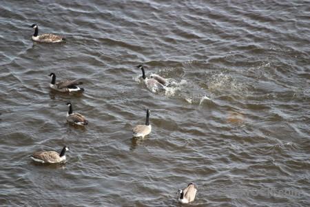 Animal water aquatic bird pond.
