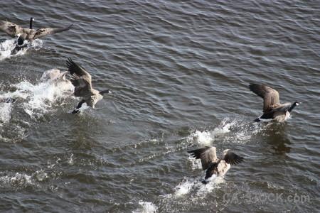 Animal water bird aquatic pond.