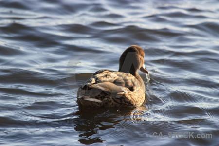 Animal water bird pond aquatic.