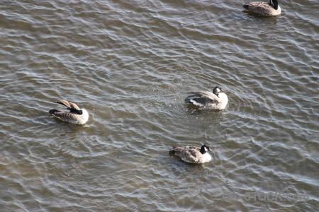 Animal water pond aquatic bird.