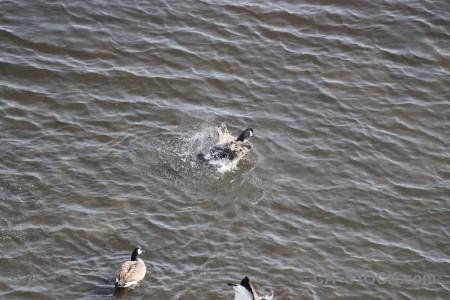 Animal water pond bird aquatic.