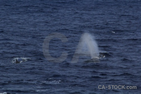 Animal whale sea drake passage day 4.