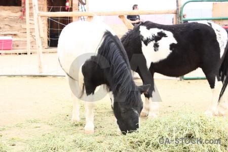 Animal white horse.