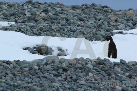 Antarctic peninsula antarctica cruise animal millerand island.