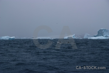 Antarctic peninsula ice penola strait cloud animal.