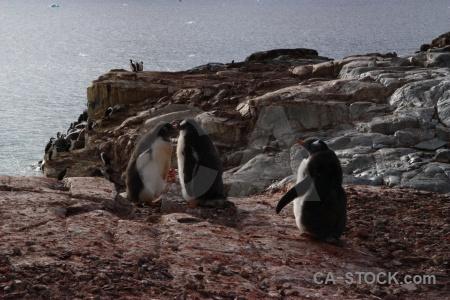 Antarctic peninsula penguin water sea south pole.