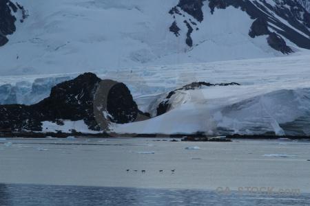 Antarctic peninsula snow sea animal ice.