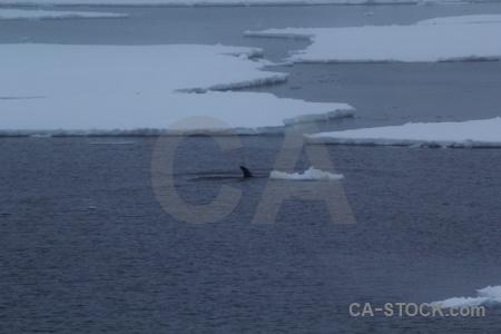 Antarctica animal day 7 water ice.