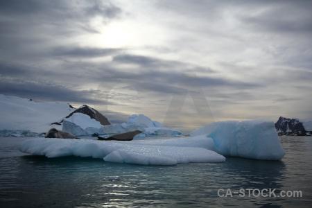 Antarctica animal marguerite bay snow seal.