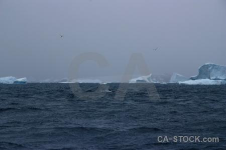 Antarctica antarctic peninsula mountain whale iceberg.