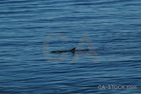 Antarctica cruise animal whale south pole adelaide island.