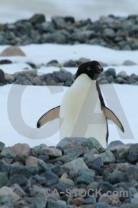 Antarctica cruise bellingshausen sea marguerite bay antarctic peninsula ice.