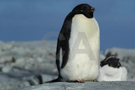 Antarctica cruise chick rock wilhelm archipelago antarctic peninsula.
