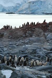 Antarctica cruise dorian bay antarctica palmer archipelago south pole.