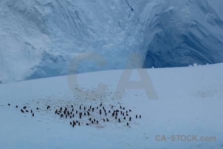 Antarctica cruise iceberg ice day 4 drake passage.
