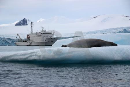 Antarctica cruise iceberg sky ice bellingshausen sea.