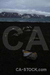 Antarctica cruise sand animal mountain antarctica.