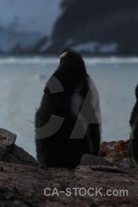 Antarctica cruise water petermann island rock gentoo.