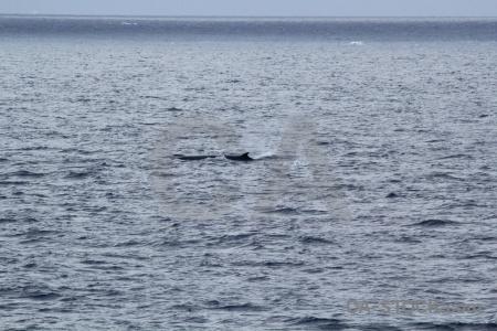 Antarctica cruise whale sea drake passage day 4.