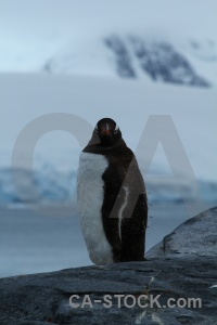 Antarctica cruise wiencke island animal south pole mountain.