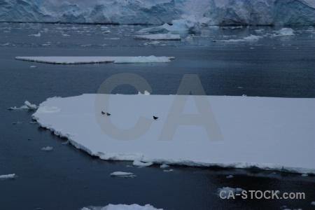 Antarctica day 6 antarctica cruise sea south pole.