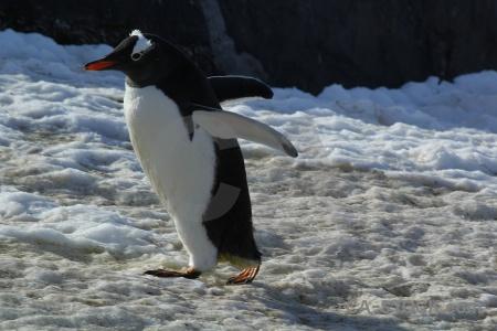 Antarctica day 8 petermann island antarctic peninsula cruise.