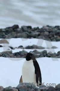 Antarctica ice antarctic peninsula day 5 millerand island.