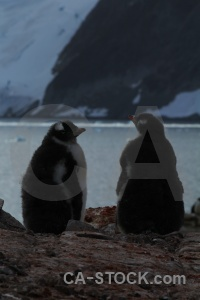 Antarctica ice petermann island water animal.