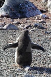 Antarctica rock antarctic peninsula petermann island cruise.