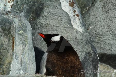 Antarctica south pole animal petermann island day 8.