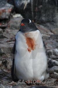 Antarctica south pole rock cruise day 8.