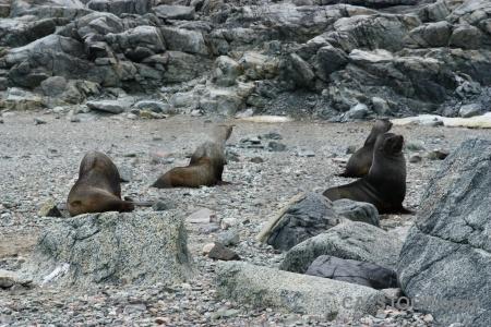Antarctica stone horseshoe island antarctic peninsula fur seal.