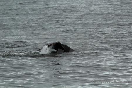 Antarctica whale adelaide island animal antarctic peninsula.
