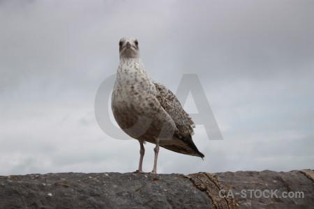 Aquatic animal bird gray.