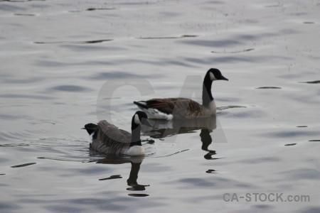 Aquatic animal bird water pond.
