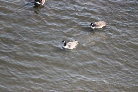 Aquatic animal pond bird water.
