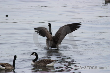 Aquatic animal water bird pond.