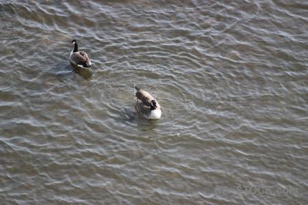 Aquatic bird animal pond water.