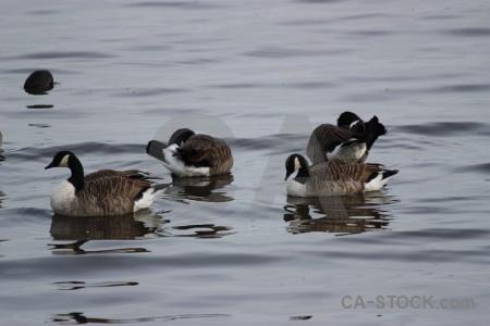 Aquatic bird animal water pond.