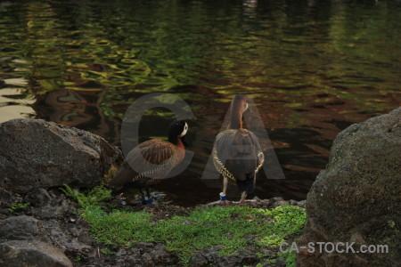 Aquatic bird pond water animal.