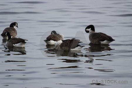 Aquatic pond animal water bird.