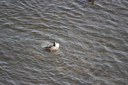 Aquatic water animal bird pond.