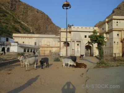 Archway animal temple india shadow.