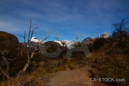 Argentina branch fitz roy patagonia cerro chalten.