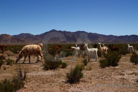 Argentina mountain salta tour altitude landscape.