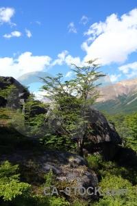 Argentina patagonia el chalten sky tree.