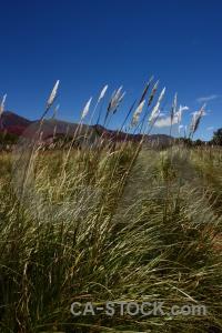 Argentina tree landscape grass jujuy.