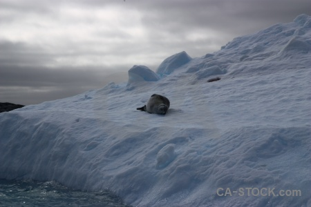 Argentine islands antarctica animal cruise south pole.