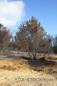 Ash burnt montgo fire tree javea.