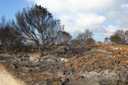 Ash montgo fire javea europe burnt.